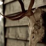 Skull-on-wall